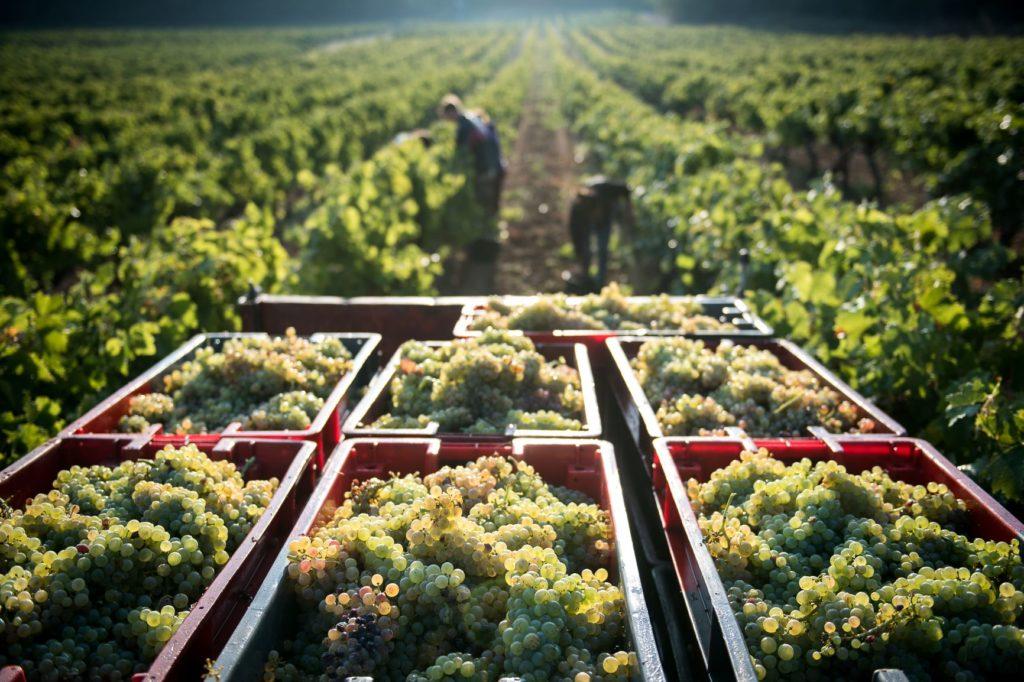 Vue sur les vignes du domaine de La Bernarde, une culture en bio